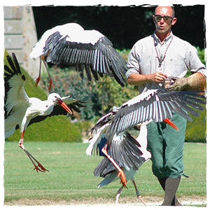 spectacle-de-cigogne